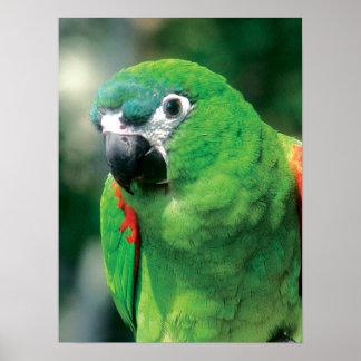 Parrot Bird Print