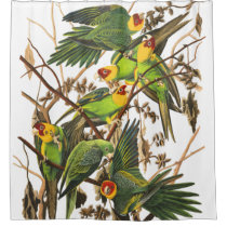 Parrot Birds Wildlife Audubon Shower Curtain