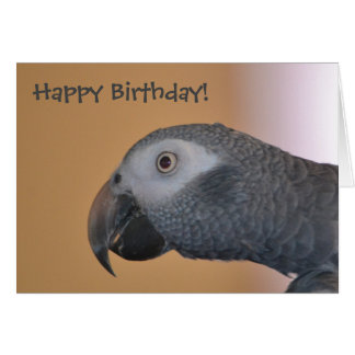 Parrot Birthday Card