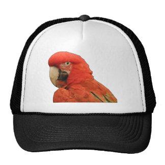 Parrot black outline. hat