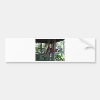 Parrot Bumper Sticker