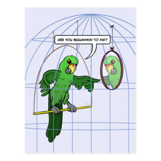 Parrot Cage Fight Postcard