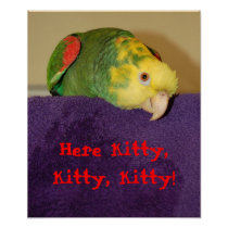 Parrot calling kitty. poster