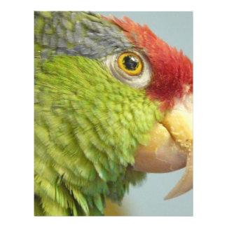 parrot custom flyer