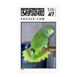 Parrot displaying postage