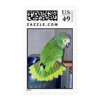 Parrot displaying stamps