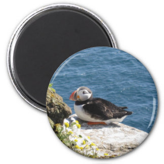 Parrot diver 2 inch round magnet