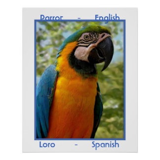 Parrot English, Loro Spanish Poster