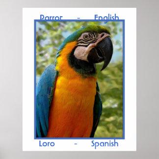 Parrot English, Loro Spanish Poster