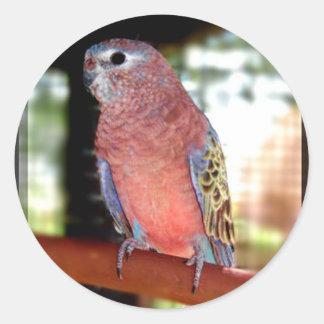 Parrot envelope seals classic round sticker