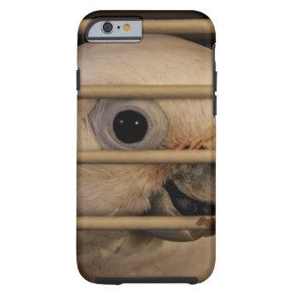 Parrot Eye Tough iPhone 6 Case