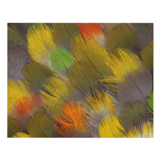 Parrot Feather Design Panel Wall Art