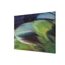 Parrot feather pattern design canvas print