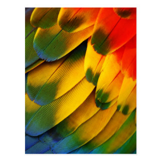Parrot Feathers Postcard
