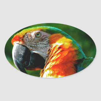 Parrot for Sale 2 Oval Sticker