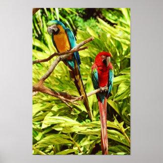 Parrot Friends Posters