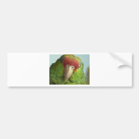 parrot front view bumper sticker