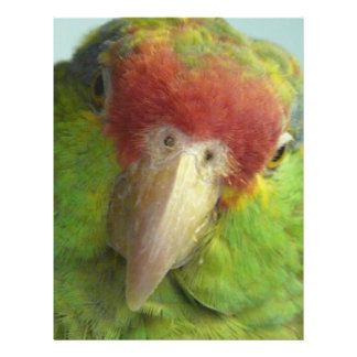 parrot front view custom flyer