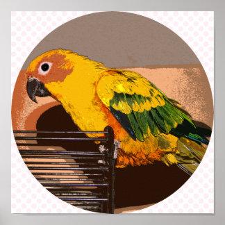 Parrot Golden Poster