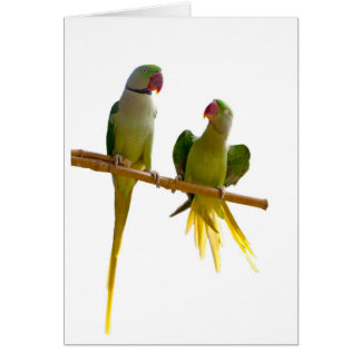 parrot, greeting cards