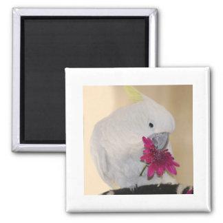 Parrot he loves me magnet
