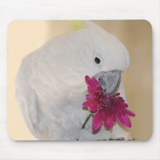 Parrot He loves me or not Mouse Pad