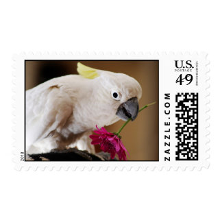 Parrot he loves me postage stamp