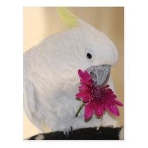 Parrot he loves me postcard