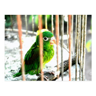Parrot in a Cage, Costa Rica Postcard