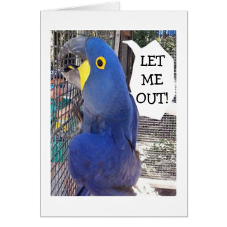 PARROT IN CAGE SAYS LET ME OUT-BIRTHDAY CARD