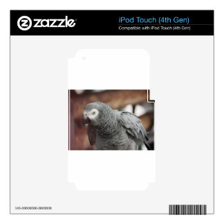 Parrot iPod Touch 4G Decals