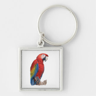Parrot Keychain