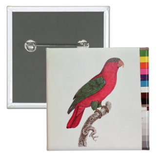 Parrot: Lory or Collared 2 Inch Square Button