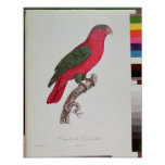 Parrot: Lory or Collared Poster
