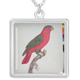 Parrot: Lory or Collared Silver Plated Necklace