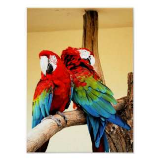 parrot love posters