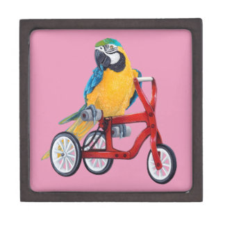 Parrot Macaw on Tricycle bike Gift Box