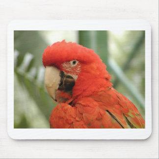 Parrot Mouse Pad
