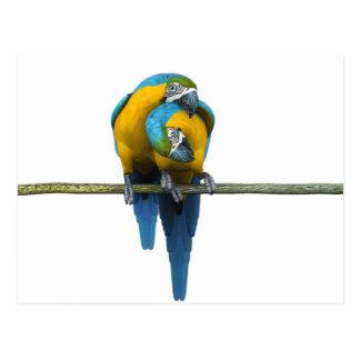 Parrot Pair Postcard