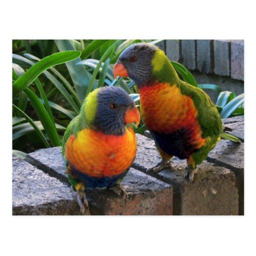 Parrot Pals Postcard