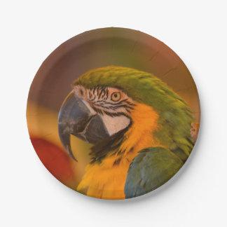 Parrot Paper Plate