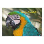 "Parrot Party Invitation 5"" X 7"" Invitation Card"