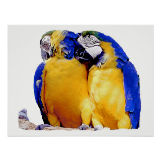 PARROT PASSION-2, poster
