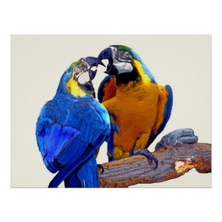 Parrot Passion, part of 2-- poster