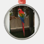 Parrot photo by Lorette Starr Christmas Tree Ornaments