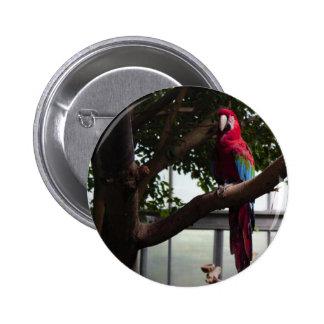 Parrot Photo Pinback Button
