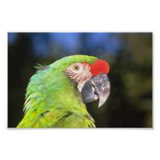 Parrot Photo Posters