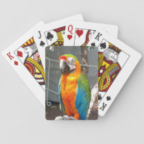 Parrot, playing cards, nature, birds playing cards