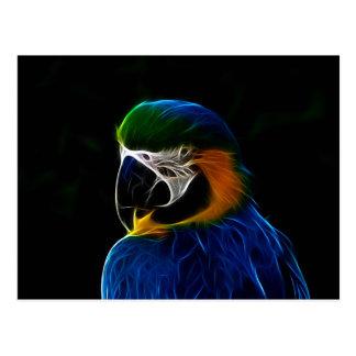 Parrot portrait colorful illustration postcard