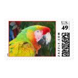 Parrot Postage Stamp